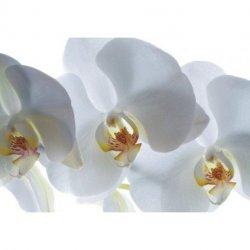 Orquídeas Volumen de Sombras