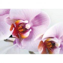 Detalle de Orquídea Blanco y Lila