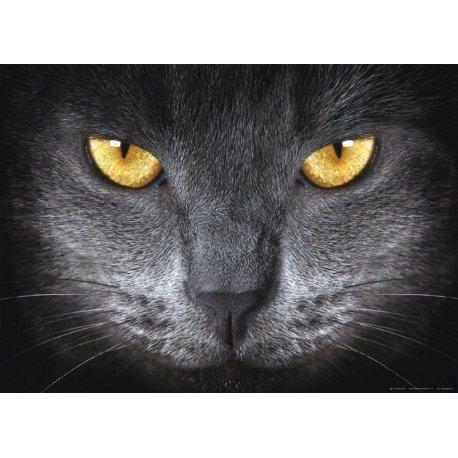 La Mirada del Gato Gris