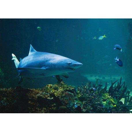 Tiburón en las Profundidades