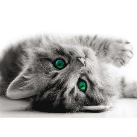 Pequeño Gato Juguetón