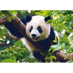 Oso Panda en el Árbol