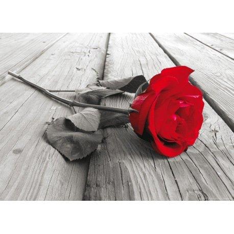 Rosa Roja sobre Blanco y Negro