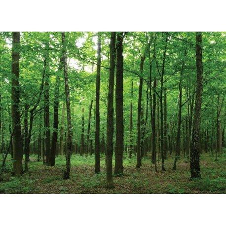Caminando por el Bosque Verde