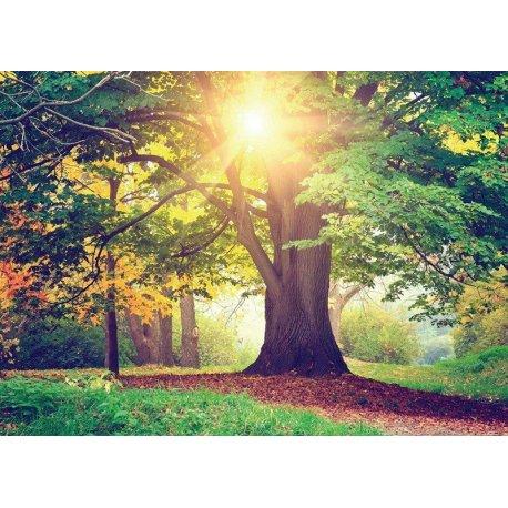 El Gran Árbol Iluminado