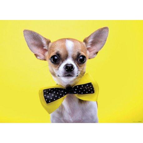 Chihuahua con Pajarita en Amarillo