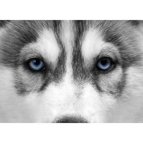 La Mirada del Husky