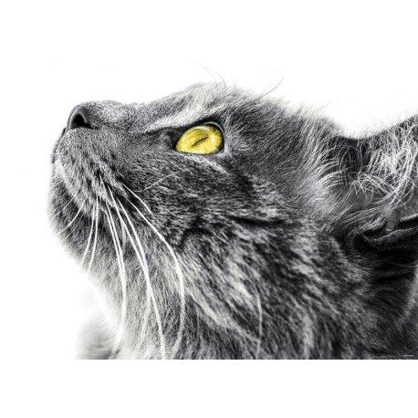 Perfil de Gato Curioso