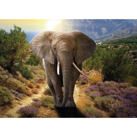 El Camino del Elefante