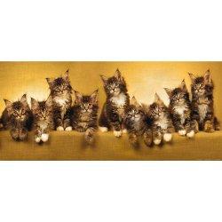 Tierna Mirada de Pequeños Gatitos