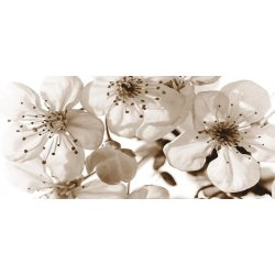 Delicadas Flores en Blanco