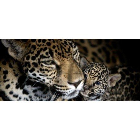 Mama Leopardo junto a Cachorro