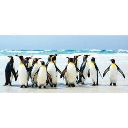 Pingüinos Emperador sobre la Playa