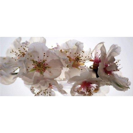 Detalle de Suave Flor Blanca