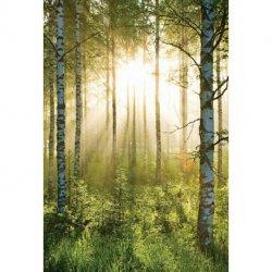 Amanece en el Bosque Verde