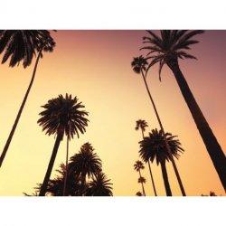 Siluetas de Palmeras Venice Beach