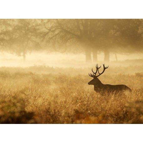 Ciervo en la Niebla