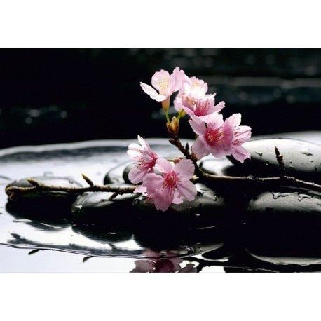 Delicada Orquídea en Lila y Rosa