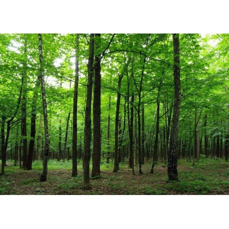 Bajo el Manto Verde del Bosque