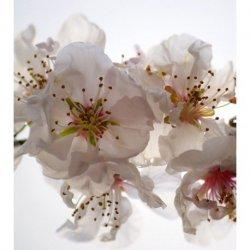Flor Blanca Iluminada