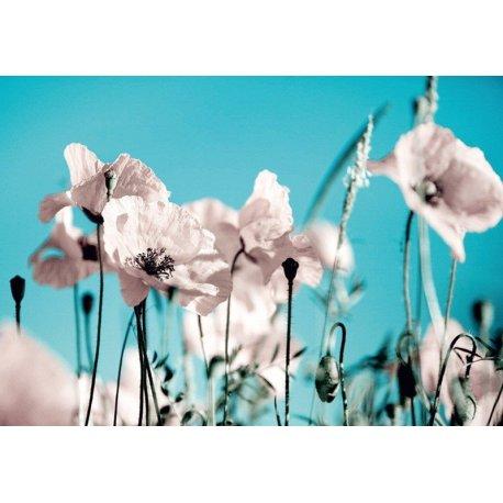 Flores en el Campo Rosa sobre Azul