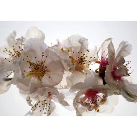 Fotografía Detalle Flores Blancas