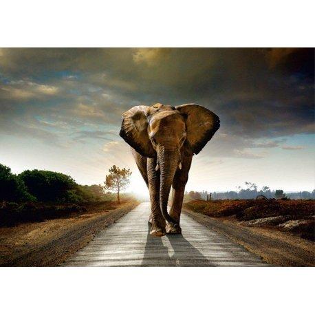 La Senda de los Elefantes