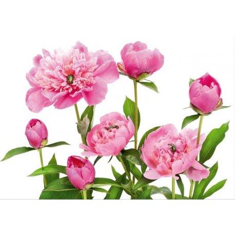 Decoración Flores Pétalos Rosas