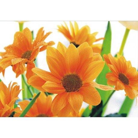 Flores Pétalos Naranja por la Mañana
