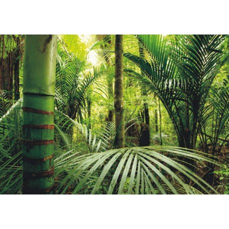Mural en Mitad de la Selva Tropical