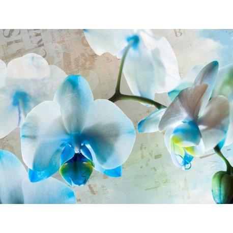 Suave Orquídea Blanca y Azul