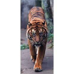 Tigre Avanzando con Fuerza