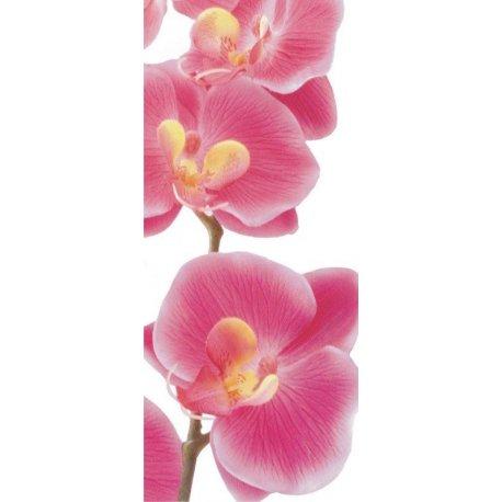 Rama de Orquídeas Rosas