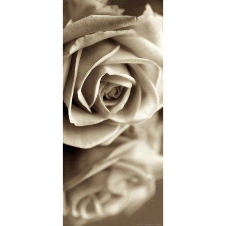 Rosa Reflejada en Blanco y Negro