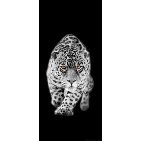 La Mirada del Tigre en Blanco y Negro