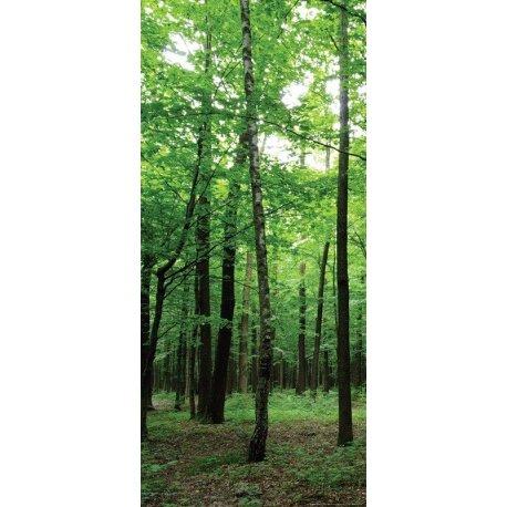 Entrada al Bosque Encantado