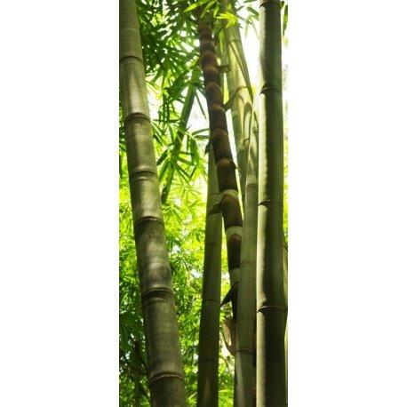 Troncos de Bambú Iluminados
