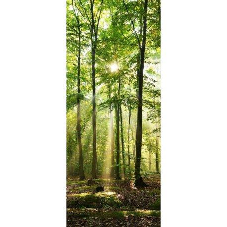 La Luz del Bosque Espeso