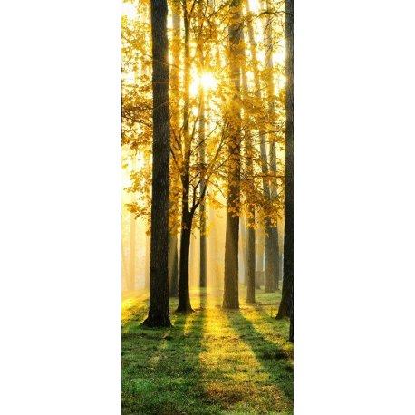 Rayos de Luz Bosque Otoñal