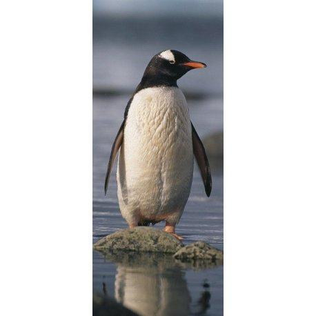 Pingüino en la Costa