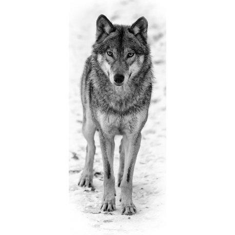 La Mirada del Lobo en la Nieve