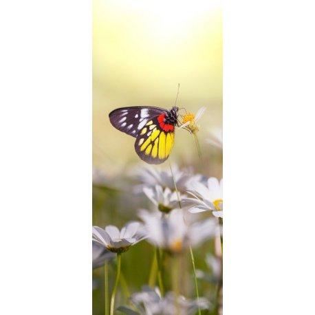 Mariposa sobre la Margarita