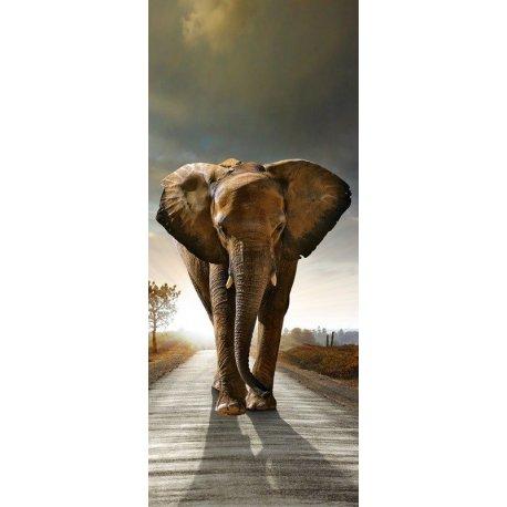La Mirada del Elefante Africano